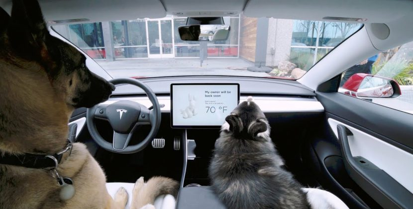 Tesla Introduces Dog Mode