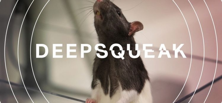 DeepSqueak: How AI Could Decode Animal Speech