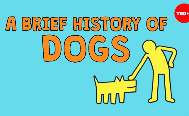 A Brief History of Dogs