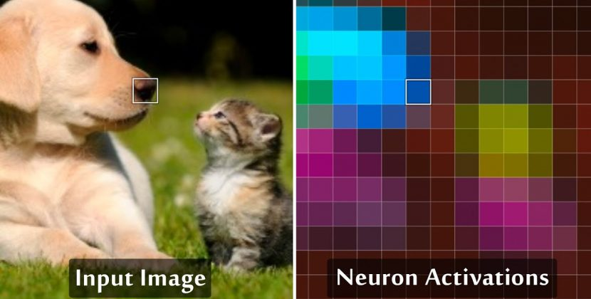 What's Inside a Neural Network?