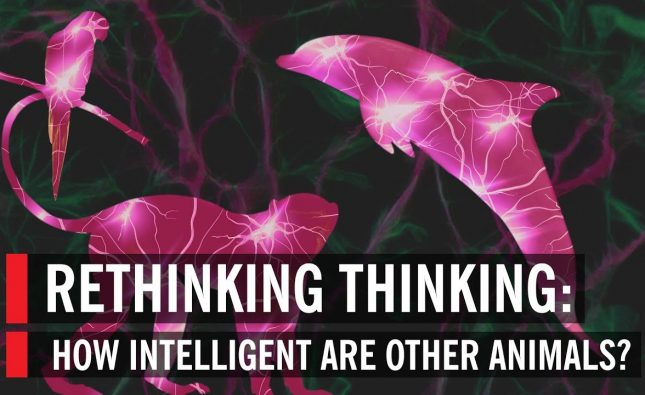 Rethinking Thinking: How Intelligent Are Other Animals?